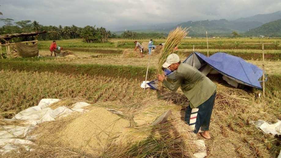 Pengurus Baru Poktan Sri Mujan Dusun V Berkomitmen Benahi Manajemen Organisasi